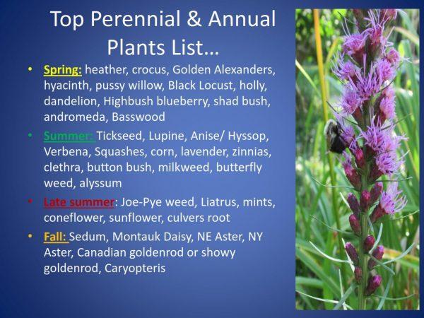 Top plants for pollinators