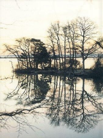 reflection of bare trees on Oyster Pond